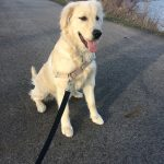 A Lost Pet Named Sophie