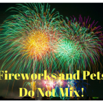Fireworks and Dogs Don't Mix: What to do if Your Dog Becomes Lost.